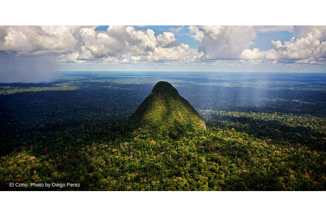El Divisor (www.rainforesttrust.org)