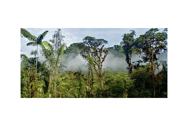 rainforests 2 (www.rainforesttrust.org)